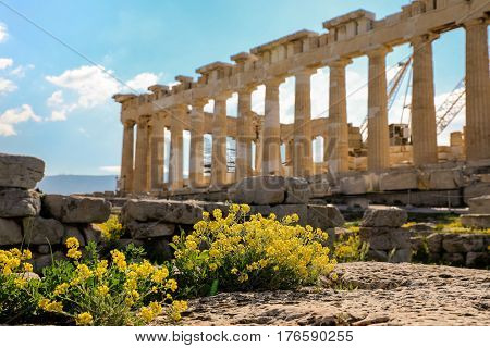 Parthenon Temple With Spring Flowers On The Acropolis In Athens.