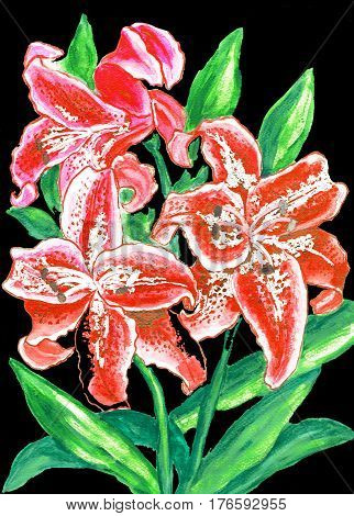 Red lilies on black hand painted picture watercolor