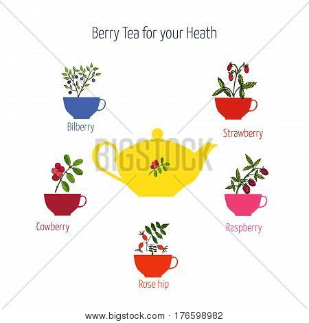 Set of berry teas raspberry tea, strawberry tea, bilberry tea, cowberry tea rose hip tea