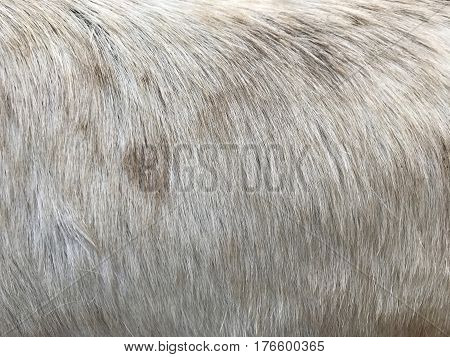 furry background white and brown stain fluffy wallpaper