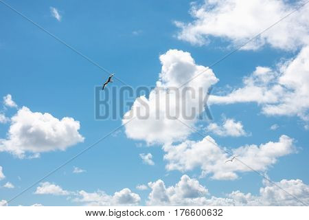 seagulls flying in blue cloudy sky in sunny day