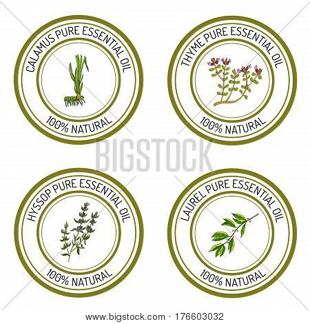 Set of essential oil labels calamus, thyme, hyssop, laurel. Vector illustration
