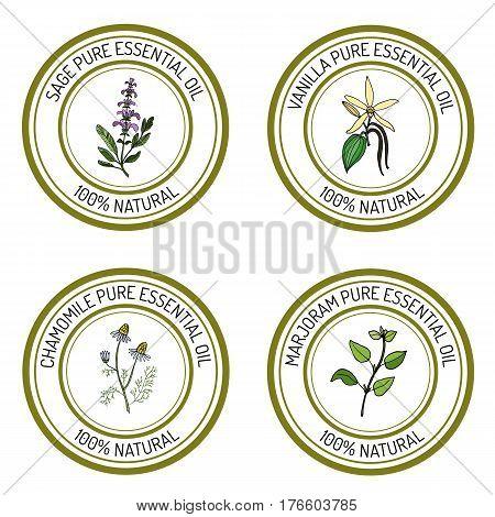 Set of essential oil labels sage, vanilla, chamomile, marjoram. Vector illustration