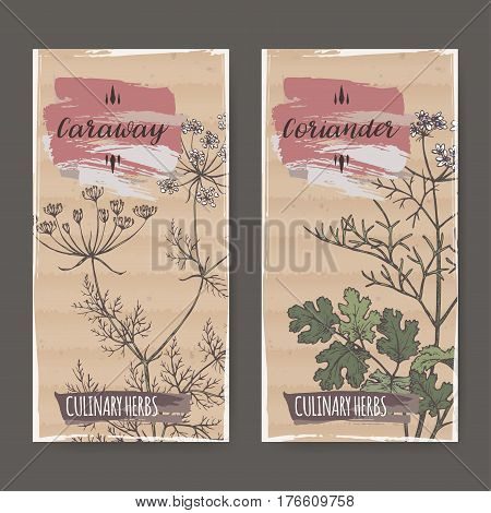 Two color labels with caraway and coriander sketch. Culinary herbs collection. Great for cooking, medical, gardening design.
