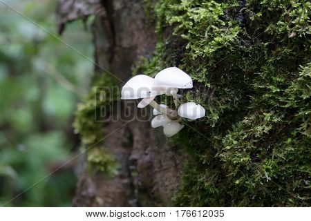 a not edible small mushrooms in the forest
