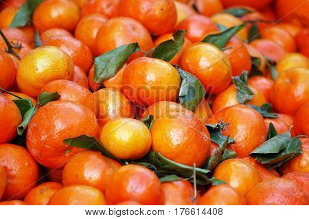 A shot of frame filled with ripe tangerine fruits at a farmer's market. May be used as background.