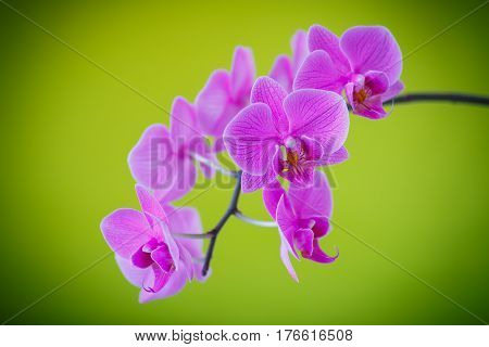 beautiful white orchid branch on an green background