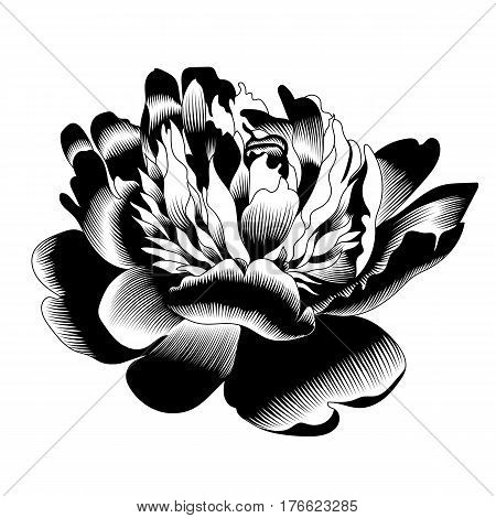 Graphical black rose bud illustration. black rose, contour rose, bloom rose, decorative rose, isolate rose, blossom rose, monochrome rose. Vector.