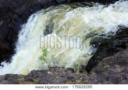 The small weak sapling near rapid waterfall