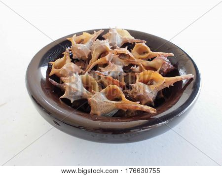 Cooked sea snails in a bowl on white background