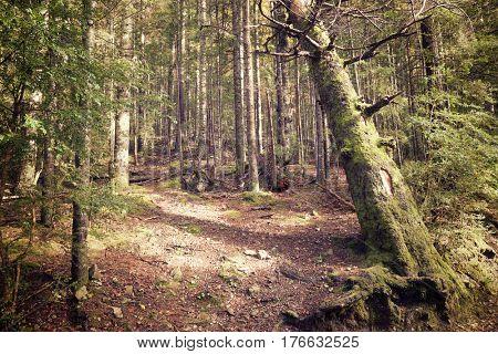 Forest in Ordesa National Park, Pyrenees, Huesca, Aragon, Spain.