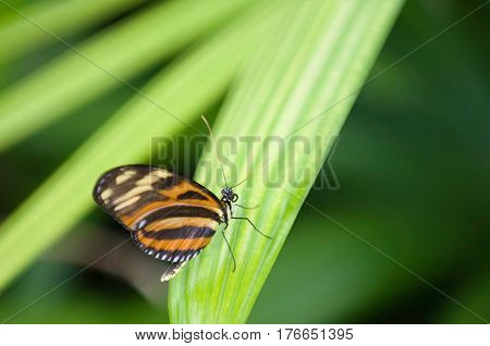 Colorful Butterfly In Nature, Color Image, Horizontal Image
