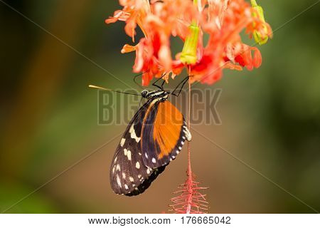 Beautiful butterfly on a beautiful red flower green background