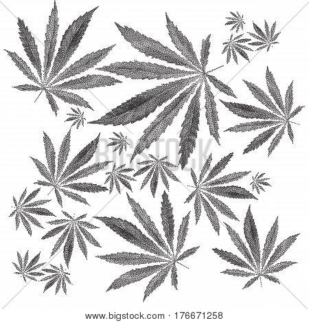 Vector illustration of dotted Cannabis sativa leaf in old style. Marijuana hemp leaf isolated on white background. Realistic illustration of plant. Stylized dotted leaves. Tattoo Hand Drawn dotwork