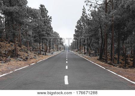 Road Through Forest Landscape