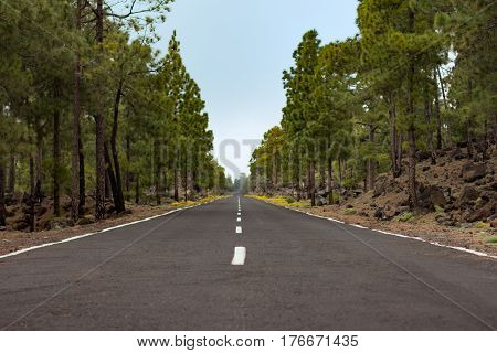 empty straight road through forest landscape -