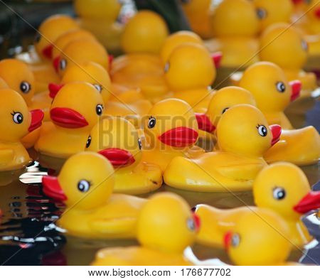 Yellow Rubber Ducks Floating in a Pool at the fair