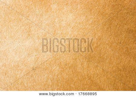 brown animal fur texture