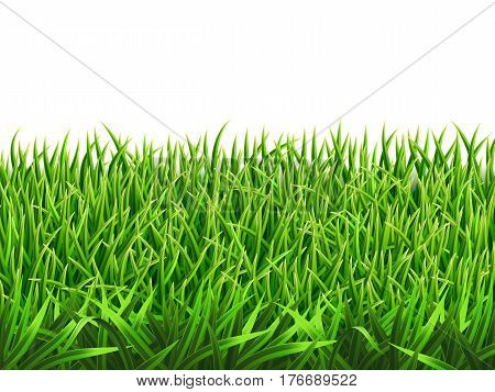 Grass on a meadow, realistic vector. Foreground for nature illustration. Each row of grass in a separate layer. Gradient mesh tool.