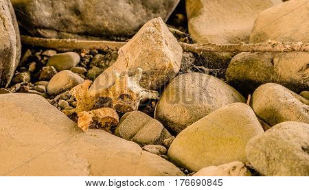 Fragments of vertebrae bones of a dead animal laying among rocks
