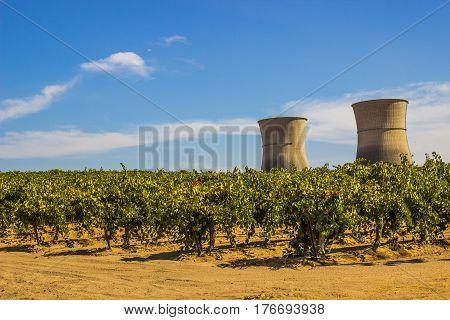 Two Nuclear Smoke Stacks Behind Grape Vineyard