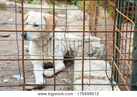 Close-up view of the net of a corral and a dog inside it
