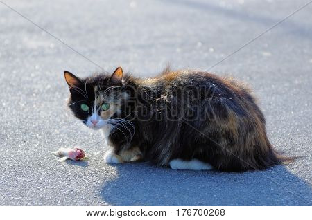 Vagrant cat sitting next to half-eaten fish in the street