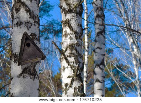 Old empty birdhouse on tree. Central Siberian Botanical Garden Akademgorodok Novosibirsk Russia. March 2017.