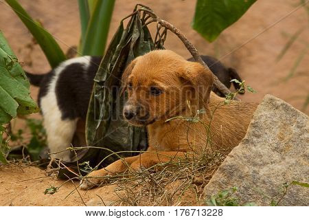 photo of two cute little feral puppies in India