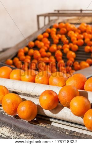 The Working Of Orange Fruits