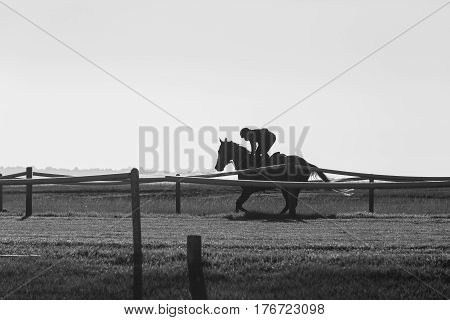 Race horse jockey silhouetted unidentified training runs black and white photo.