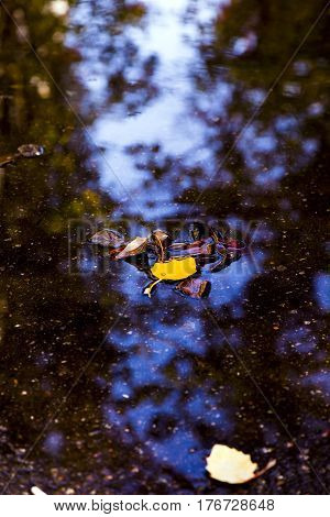 Yellow and brown Tree Leaves in the Puddle after Rain with Sky reflections in Water. Nature outdoor Background fall Mood Theme