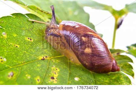 Animal snail on the green leaf of plant