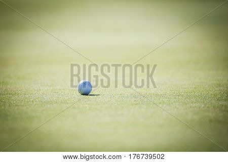 Close Up Of A Golf Ball On A Green On A Golf Course