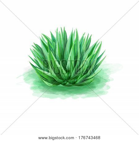 Green aloe in a clean white background