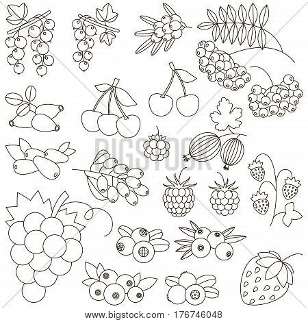 Berry set to be colored. Coloring book to educate kids. Learn colors. Visual educational game. Easy kid gaming and primary education. Simple level of difficulty. Coloring pages.