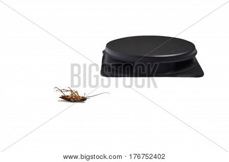 Dead cockroach lying on the foreground and blurred trap on the background isolated on white