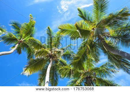 Coconut Palm Trees Over The Sky