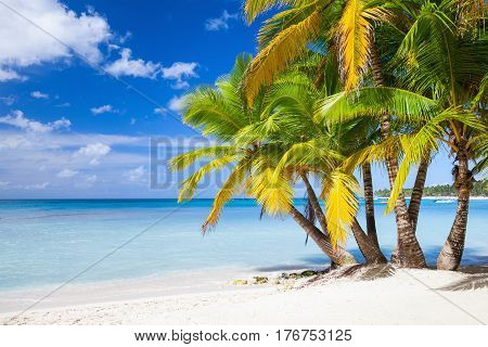 Saona Island Coast, Dominican Republic