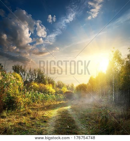 Fog in autumn wood at the sunrise