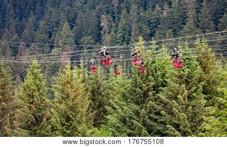 Empty Zip Line Harnesses in the Evergreens