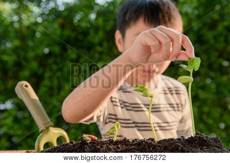 Young Asian Boy With Seedling In Garden