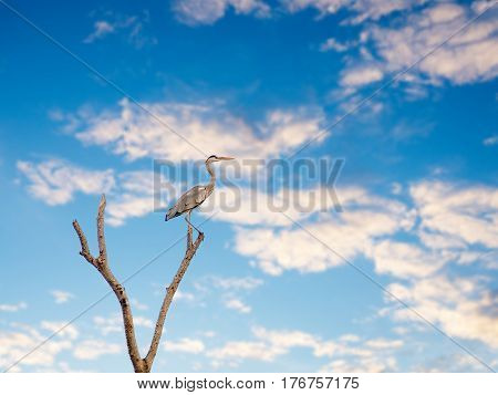 Birds perch on a branch on a background of blue sky.