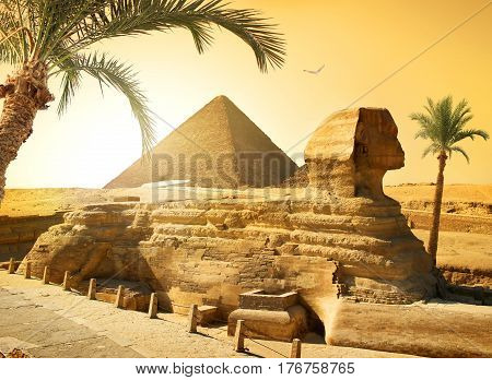 Palms near sphinx and pyramid in egyptian desert