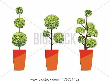Tree round shape in pots isolated on white background.