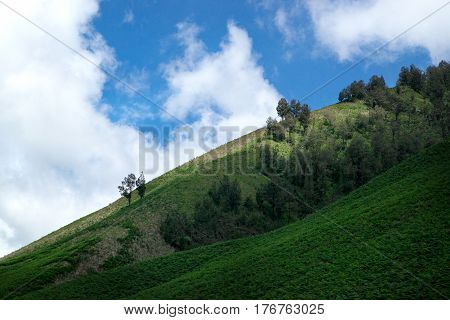 Green field savannah with trees hills and a blue sky in the afternoon near mount Bromo at the Tengger Semeru National Park in East Java Indonesia.