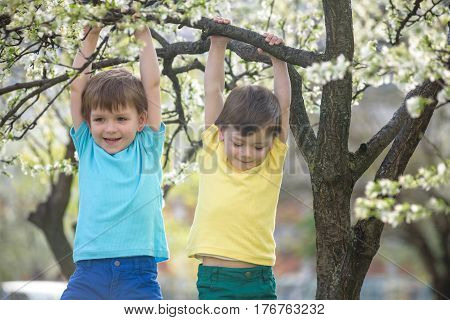 Two Boys Brothers Kids Hanging From A Blossom Spring Tree