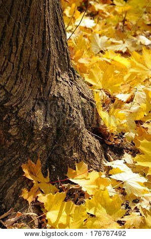 Close up of a group of autumn leaves