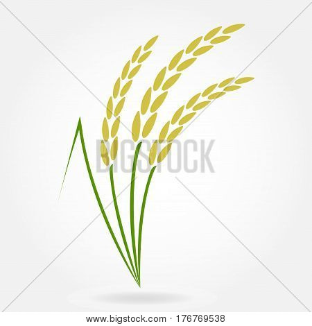 Rice. Crop symbol. Rice or Wheat ears design element. Agriculture grain. Colorful vector illustration.