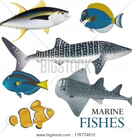 tropical marine fish collection marine vector illustration